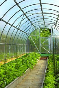 vad kan man odla i växthus